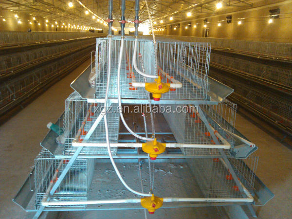 Galvanized Steel Structure Chicken House for Algeria