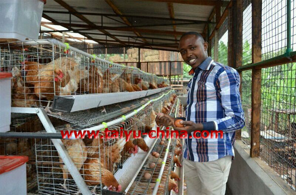 design poultry farm house for layer chickens in kenya