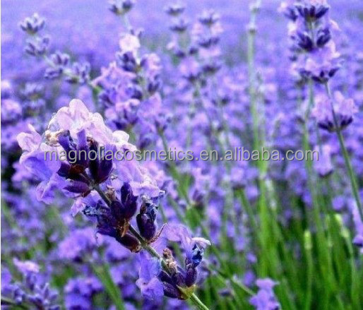 Lavender Moisturizing Cream Cosmetics