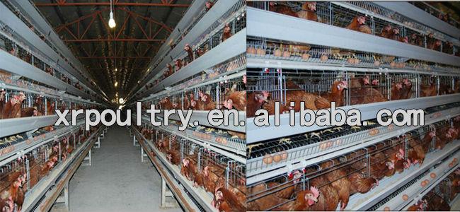 Chicken Layer House Plan Plans