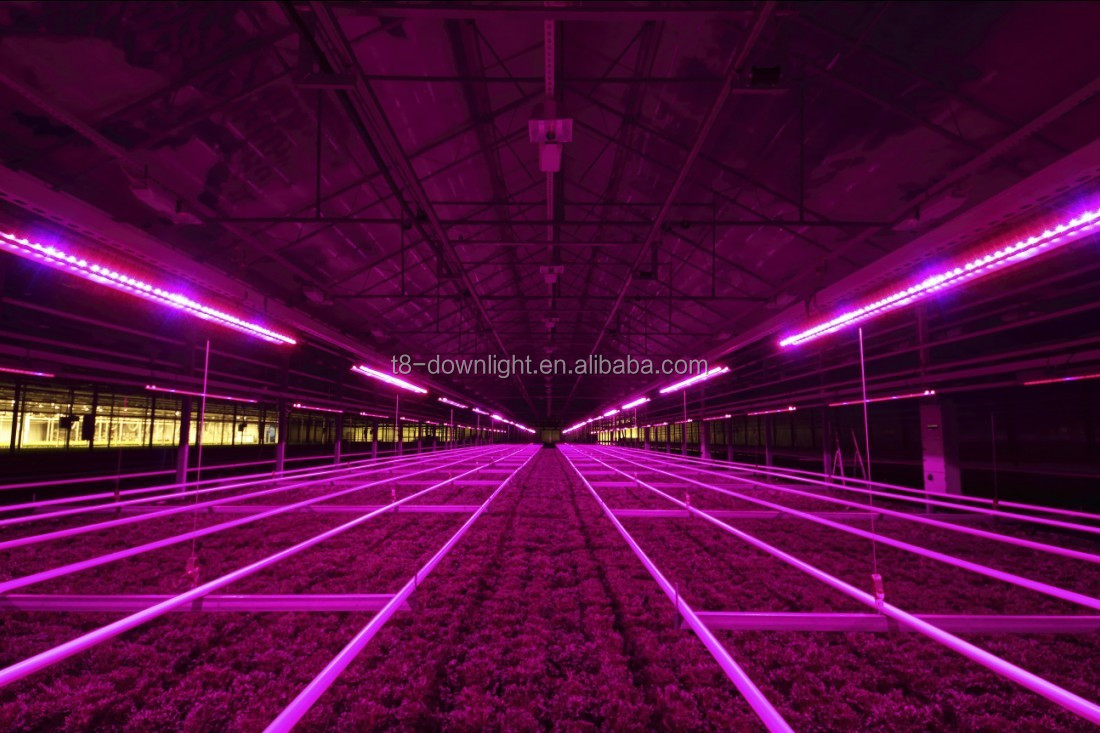 2014 Best Price 660nm Led Grow Light For Greenhouses Growing ...