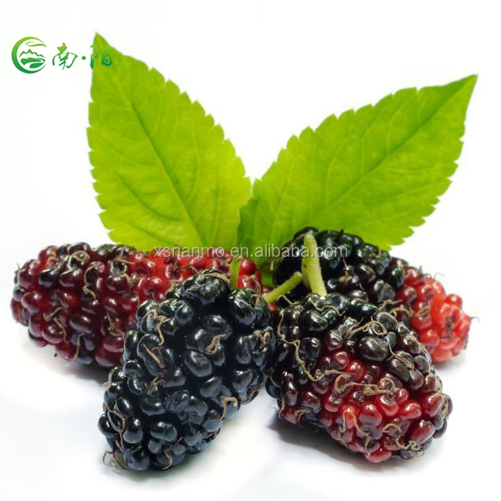 Nature Dried Mulberry Fruit