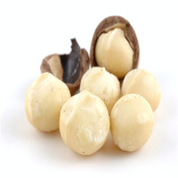 Cheap price Raw organic Macadamia nuts without shell