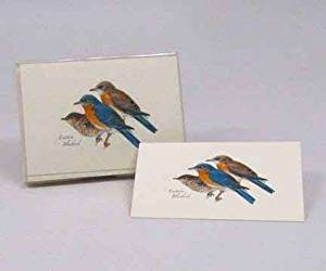 Steven M. Lewers Earth Sky Water LEWERSNC53 Eastern Bluebird Notecard Assortment (8 of 1 style)
