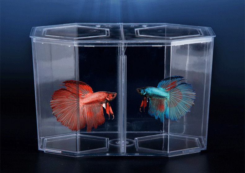 China manufacturer aquarium acrylic double room betta fish for Betta fish tank size