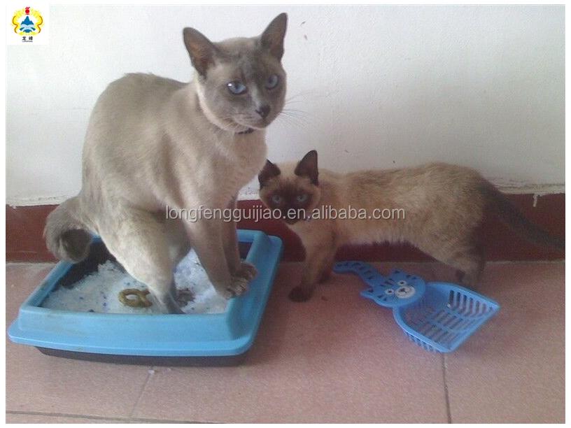 Silica Dust In Cat Litter