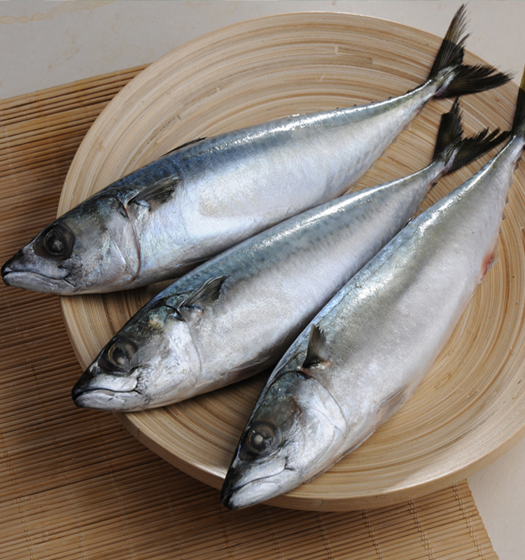 Pacific Mackerel Wr Fish Scientific Name Of Mackerel Fish