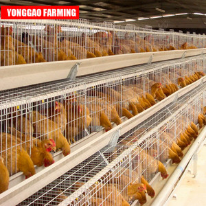 poultry farm broiler breeding cages laying hens equipment system price egg chicken automatic battery layer chicken cage for sale