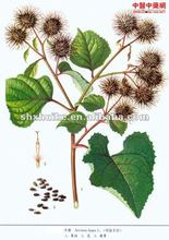 100% Natural Great Burdock Achene Plant Exract