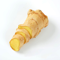 China natural fresh ginger wholesale garlic
