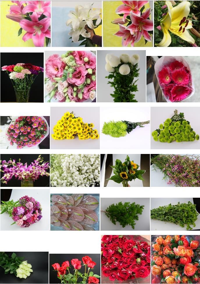 пресс-конференции, посвященной название срезанных цветов с картинками экзотика стали известны