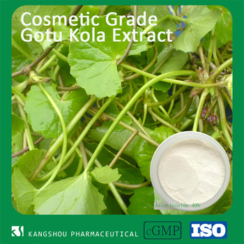 GMP&ISO Factory provide natural herb extract Gotu Kola leaf extract with Asiticcoside 40% 90%
