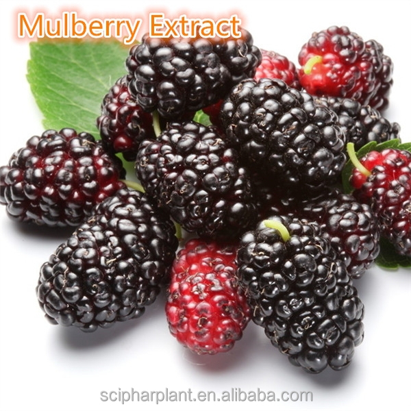 GMP HALAL factory supply plant extract of mulberry