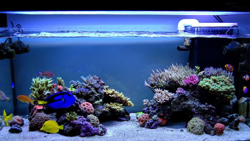 We Set Up Saltwater Aquariums (for Philippine Costumers Only ...