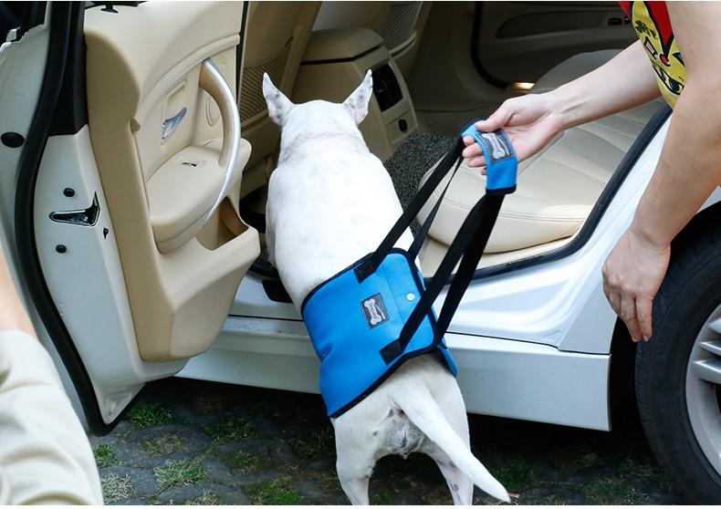 Klettergurt Hund : Doglemi sicherheits hund einfach zu fuß harness soft lift