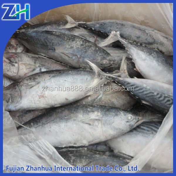 Fish Product Type and Whole Part frozen bonito tuna