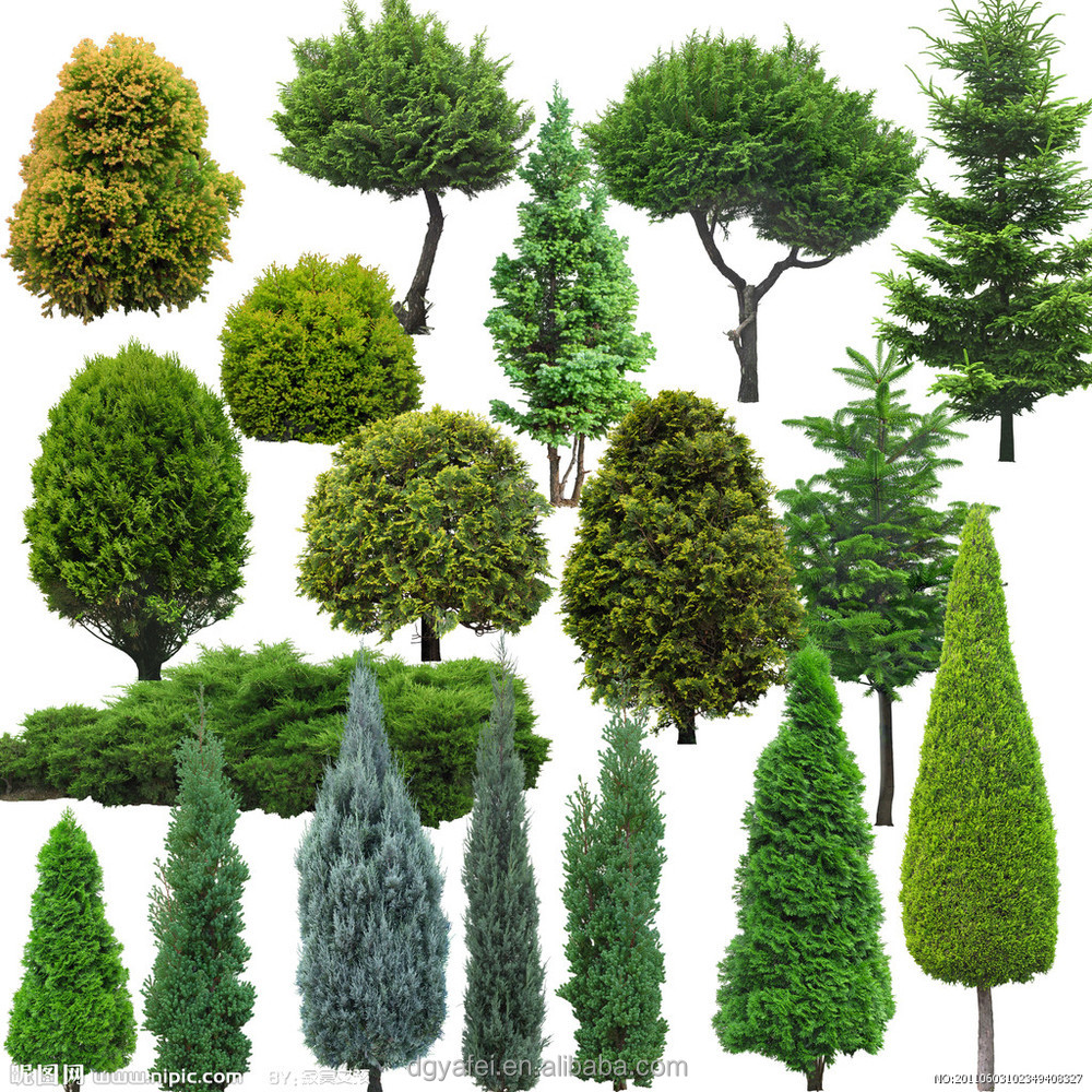 Different types of plants and trees outdoor artificial for Small decorative evergreen trees