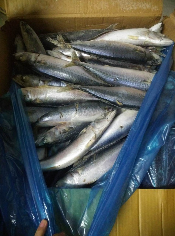 Grade A Best Price Frozen Pacific Mackerel <strong>Fish</strong>