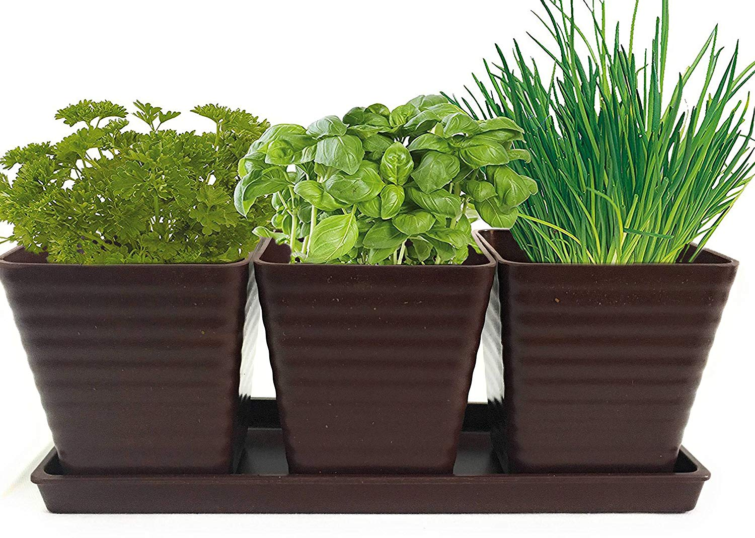 Get Quotations · Grow 5 Herbs With Burpeeu0027s Herb Garden Starter Kit    Parsley, Cilantro, Chives,