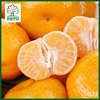 Fresh satsuma baby mandarin in price
