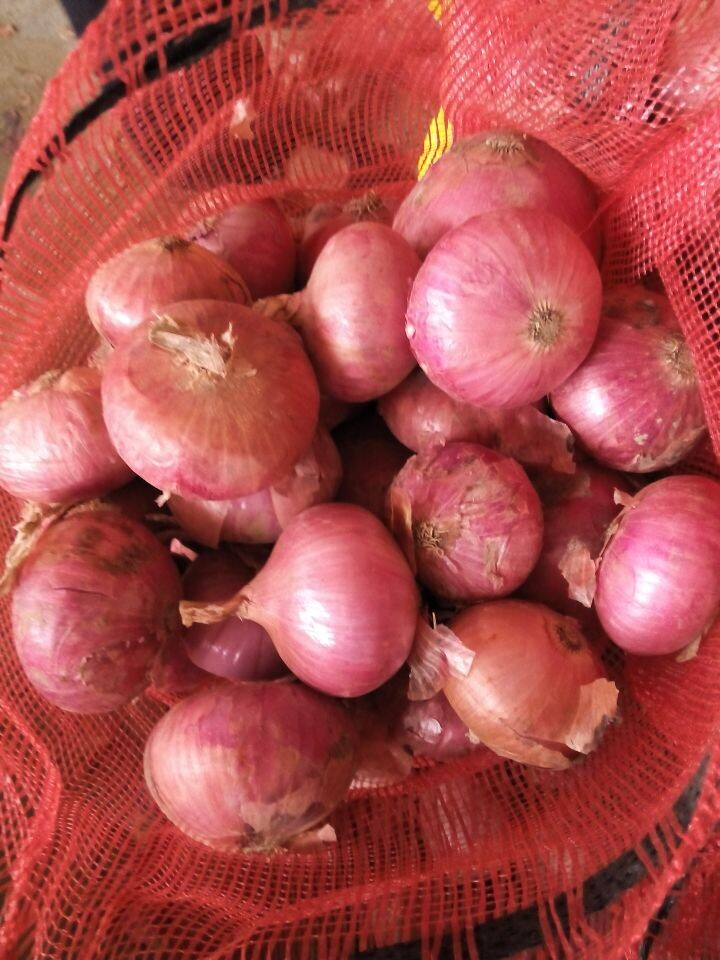 fresh red onion with round shape 5-7cm