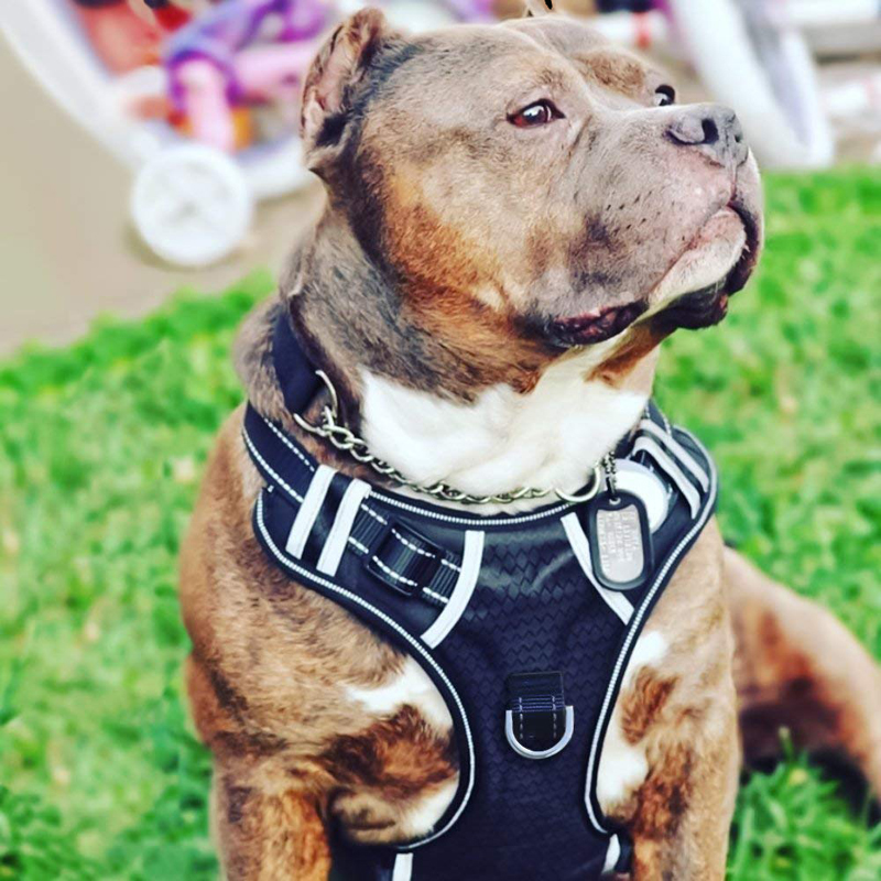Wholesale OEM Manufacture, Big Dog Harness No Pull Adjustable Pet Reflective Soft Vest for Large Dogs Easy Control Harness