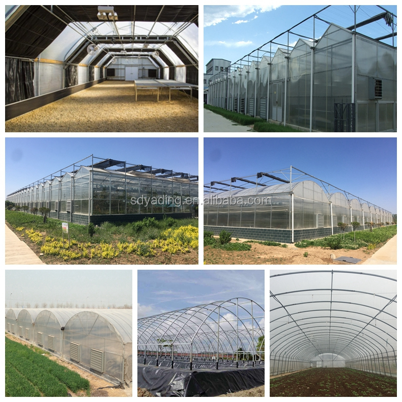 Cheap agriculture multispan greenhouse, tunnel greenhouse for cultivation