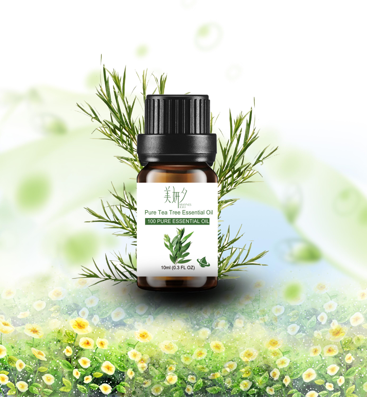 Bulk organic tea - Pure Tea Tree Oil Organic Tea Tree Essential Oil Bulk Tea Tree Massage Oil Prices