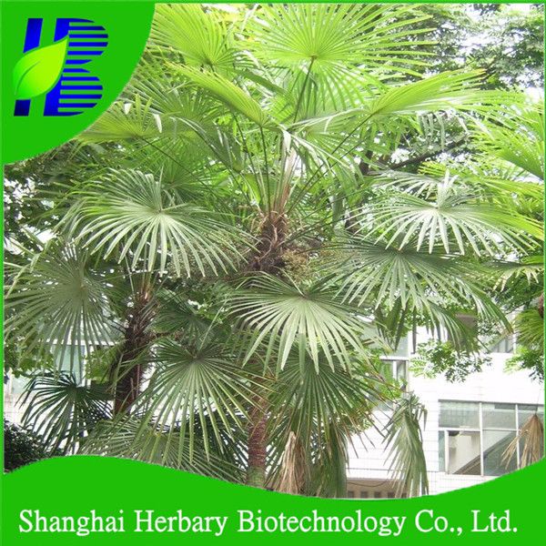 Outdoor ornamental palm seeds for planting
