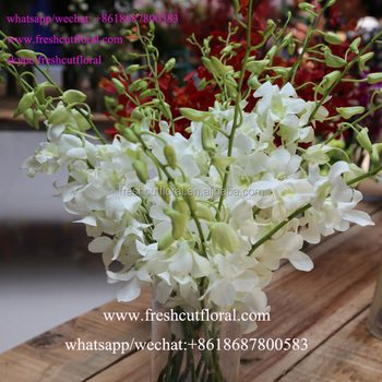 Export Hoge Kwaliteit Mooiste Orchidee Bloemen En Japan Bewaard