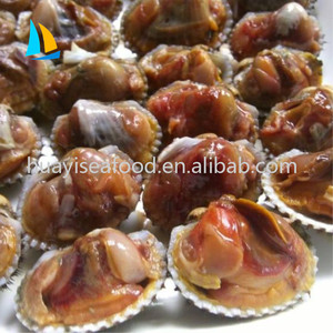 Ark Shell Meat, Ark Shell Meat Suppliers and Manufacturers at
