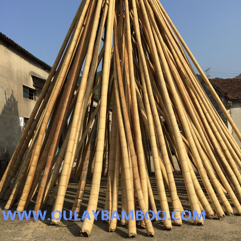 Raw moso bamboo poles canes sticks buy bamboo poles for Uses for bamboo canes