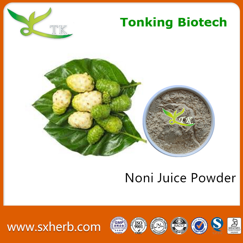 Morinda Citrifolia Linn P. E. / Noni Fruit Extract / Noli Extract Powder Fresh Noni Fruit