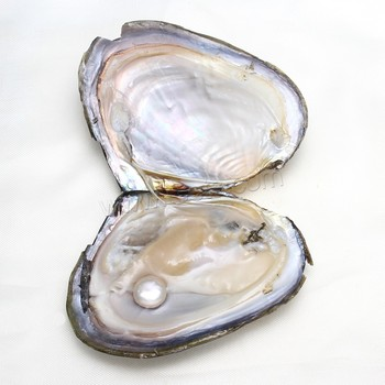 where to buy oyster shells