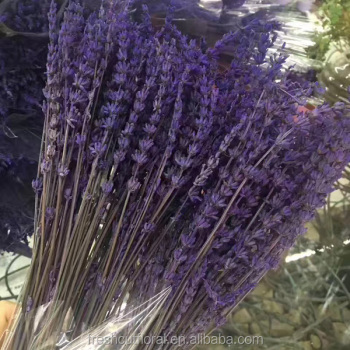 2017 New Arrival Preserved Lavender Flower With Long Stem At Good Quality  And Low Price - Buy Preserved Lavender Flower,Dried Lavender