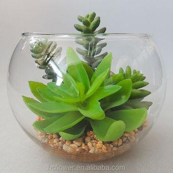 Piante Grasse In Vetro.Combinazione Di Vetro Con Piu Piante Grasse Piante In Vaso Per La