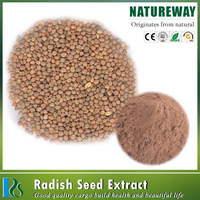 Wholesale Chinese Turnip Seed Extract Raphanus sativus L.