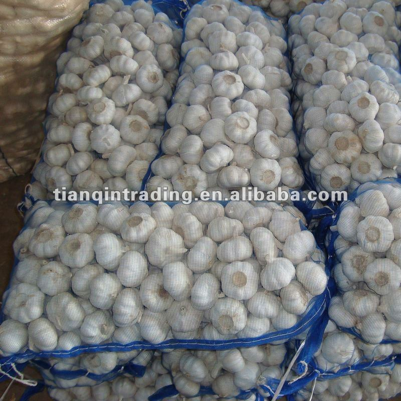 normal white garlic for malaysia