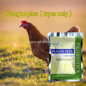 layer chicken lactobacillus acidophilus concentrates feed