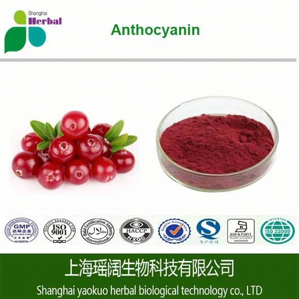 Natural Bilberry Extract in Bulk /Cranberry Juice Extract Powder 25% anthocyanins cranberry extract