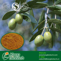 Olive leaf extract, Oleuropein Powder, energy drink additives