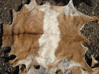 raw goat skin
