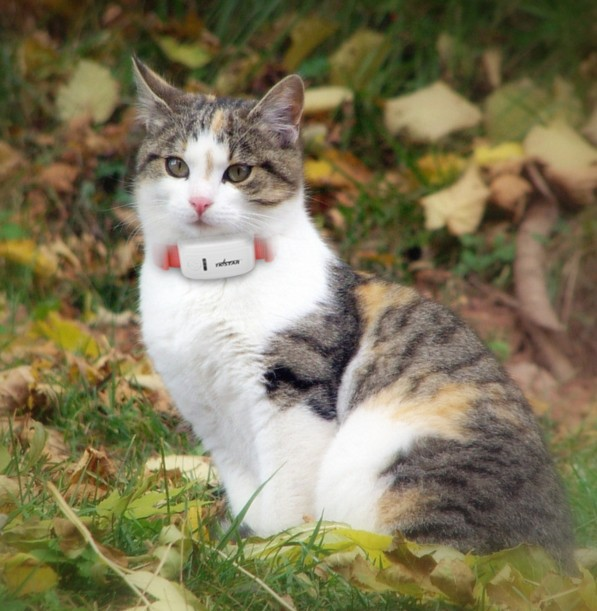 TK909 Long Standby Time Dog Cat Pet Personal TKSTAR GPS Tracker Realtime