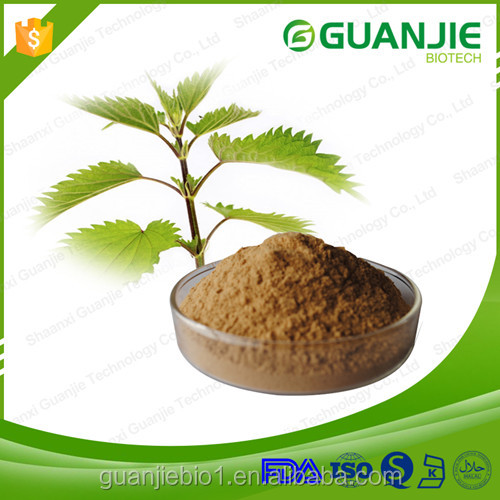 100% Natural Nettle root extract/Nettle extract
