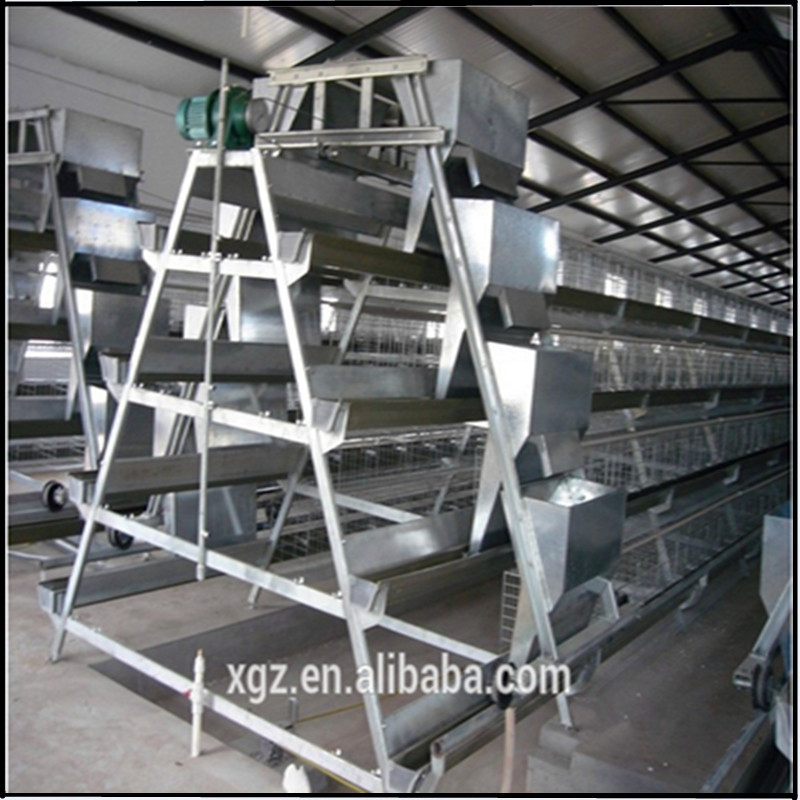 Perfect steel structure layer chicken shed
