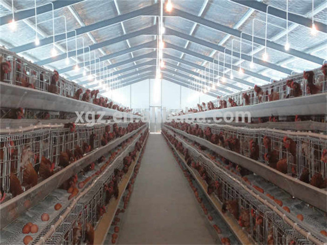 chicken farm building chicken egg poultry farm