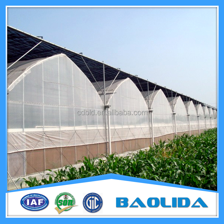 Galvanized Steel Structure commercial/agricultural used film covering greenhouse