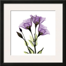 canvas art printing purple tulip famed and card paper Home Decor Wall by machine
