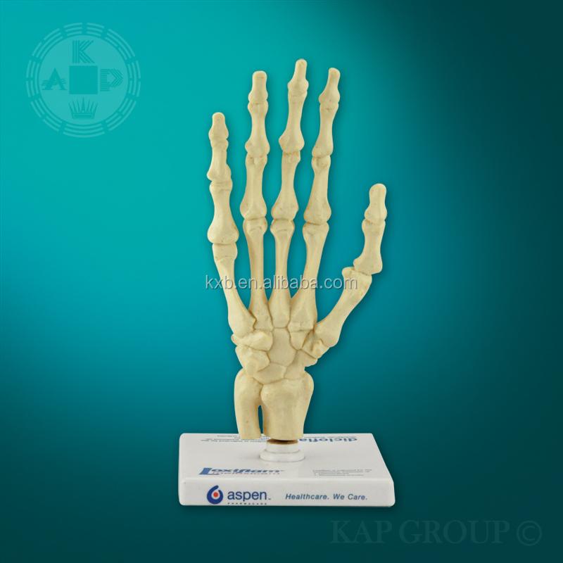 Plástico 3d Enseñanza De La Anatomía Humana Esqueleto Mano Modelo ...
