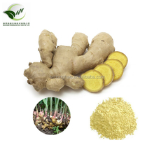 Manufacturer supplier natural herb dried ginger extract powder(water soluble )